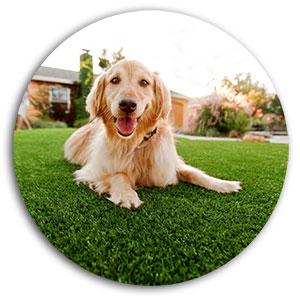 Artificial Grass Maintenance Service Clean Inspect