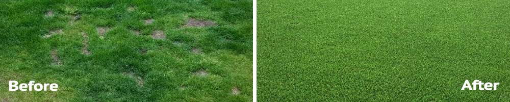 artificial vs real grass for dogs